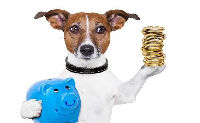 dog holding money and piggy bank